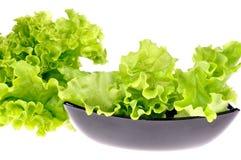 Verse groene salade royalty-vrije stock afbeeldingen