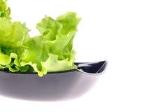 Verse groene salade royalty-vrije stock foto