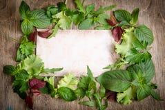 Verse groene salade op het kader Stock Foto's
