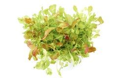 Verse groene saladeinstallaties in pot Stock Foto