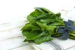 Verse groene Spinaziebladeren - dieet en gezondheidsconcept Royalty-vrije Stock Foto's