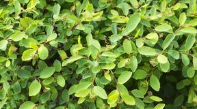 Verse groene struiken en bladerenachtergrond na de regen royalty-vrije stock afbeeldingen