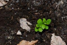Verse groene ter plaatse Stock Foto