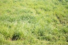 Verse groene weide op heuvel in vakantie Stock Foto