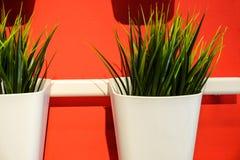 Verse groene Wheatgrass groeit in een concrete pot Tegen de rode muur stock foto's