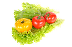 Verse groente royalty-vrije stock fotografie