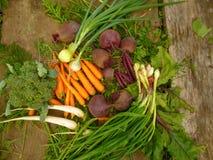 Verse groenten: ui, bieten, wortelen, bloemkool, radijs Stock Afbeelding