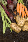 Verse groenten van mijn tuin Royalty-vrije Stock Foto's