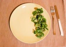 Verse groentesalade in groene plaat stock fotografie