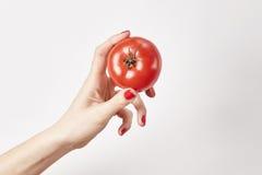 Verse groentetomaat in vrouwenhand, vingers met rode die spijkersmanicure, op witte achtergrond wordt geïsoleerd, gezond levensst Royalty-vrije Stock Foto's