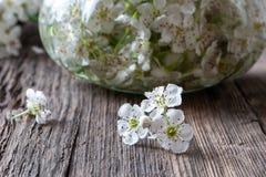 Verse haagdoornbloemen en tint op een lijst stock afbeelding