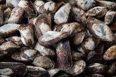Verse halve semitortaschaaldieren van Trisidos van de propellerbak bij zeevruchtenmarkt Stock Foto