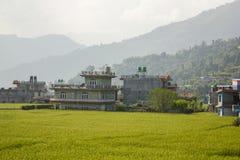 Verse heldergroene padievelden tegen de achtergrond van dorpshuizen en bergsilhouetten royalty-vrije stock afbeeldingen