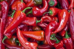 Verse hete Spaanse pepers Stock Foto