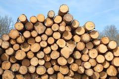 Verse houten nagels Stock Foto