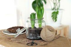 Verse hyacinten in een kruik Royalty-vrije Stock Foto