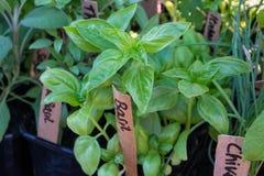 Verse ingemaakte het groeien kruiden bij een landbouwersmarkt Stock Afbeeldingen