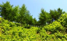 Verse installaties en bomen Royalty-vrije Stock Fotografie