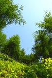Verse installaties en bomen Royalty-vrije Stock Afbeelding