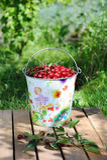 Verse kersen in een gekleurde emmer en rijpe kersen met bladeren openlucht Royalty-vrije Stock Afbeeldingen