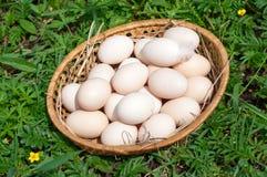 Verse kippeneieren in een mand Royalty-vrije Stock Foto's