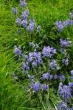 Verse Klokjebloemen op Heuvel royalty-vrije stock afbeelding