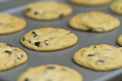Verse koekjes Stock Foto's