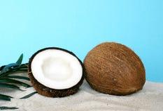 Verse kokosnoot Royalty-vrije Stock Afbeelding