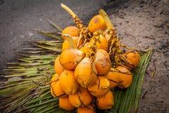Verse kokosnoten op de bladeren Exotische vruchten van Sri Lanka Bos van kokosnoten Milieuvriendelijke producten royalty-vrije stock afbeelding