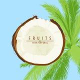 Verse kokosnotenillustratie Royalty-vrije Stock Foto's
