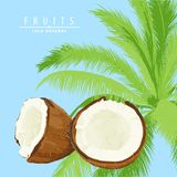 Verse kokosnotenillustratie Stock Foto