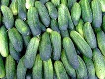 Verse komkommers Royalty-vrije Stock Afbeeldingen