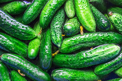Verse komkommers Royalty-vrije Stock Fotografie