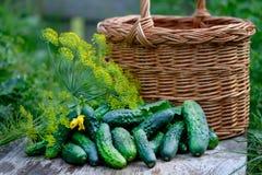 Verse komkommers en dille Stock Foto