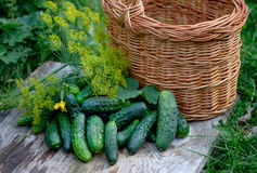 Verse komkommers en dille Stock Fotografie