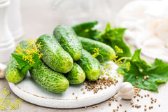 Verse komkommers en ingrediënten voor behoud Stock Afbeeldingen