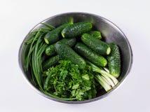 Verse komkommers en kruiden met dalingen Stock Afbeelding