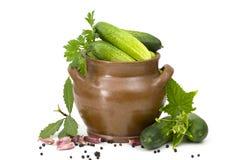 Verse komkommers, kruiden en kruiden Royalty-vrije Stock Foto's