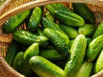 Verse komkommers in mand Stock Afbeeldingen