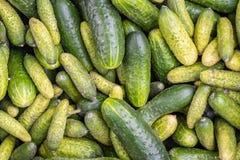 Verse komkommers na oogst stock foto's