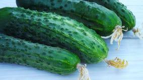 Verse komkommers van de tuin Stock Afbeelding