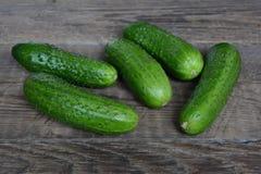 Verse komkommers van een bed Royalty-vrije Stock Foto