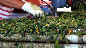 Verse komkommers voor de markt stock footage