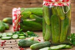 Verse komkommers voor het inleggen Royalty-vrije Stock Foto