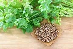 Verse koriander, koriander en een kom zaden Stock Afbeeldingen