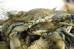 Verse krabben bij een vissenmarkt Royalty-vrije Stock Afbeeldingen