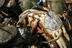 Verse krabben op de markt in Yangon, Myanmar royalty-vrije stock afbeeldingen