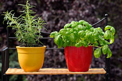 Verse kruiden in potten Stock Foto