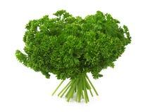 Verse krullende parsleys Stock Afbeelding