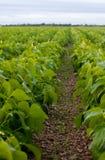 Verse landbouwgrond Royalty-vrije Stock Afbeeldingen